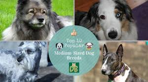 No Shed Dogs Medium by Top 10 Popular Medium Sized Dog Breeds Youtube