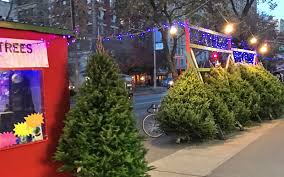 Pick Up A Christmas Tree On The Sidewalk