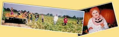 Fleitz Pumpkin Farm Groupon by Fleitz Pumpkin Farm About Us