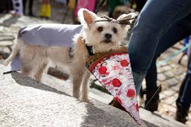 Tompkins Square Park Halloween Dog Parade Winner by Cute Overload Great Pupkin Dog Costume Contest Returns To Fort