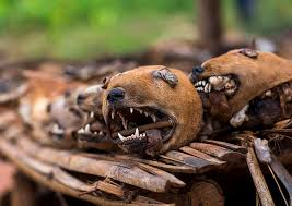 West Africa Bonhicon Dogs Heads Sold On A Voodoo Market