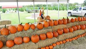Pumpkin Patch Houston Tx Area by 5 Pumpkin Patches You Can U0027t Miss This Fall Texas Hill Country