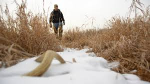 Deer Antler Shed Hunting by When Should You Start To Shed Hunt Legendary Whitetails