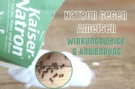 natron gegen ameisen hilft das hausmittel