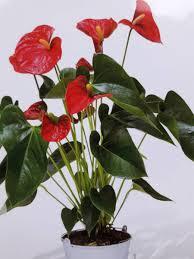 plantes vertes d interieur plantes vertes et fleuries d intérieur fleuriste marseille 13013