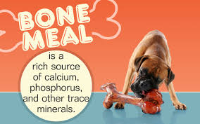 Do Bullmastiffs Shed A Lot by A Question That Bugs All Dog Owners Is Bone Meal Good For Dogs