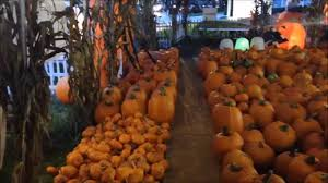Pumpkin Picking Pa by Worlds Largest Pumpkin Patch For Halloween In Celebration Youtube