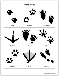 We Concluded Our Afterschool Activity With A Great Book About The Different Types Of Footprints And Signs Animals Make My Son Had Loads Fun
