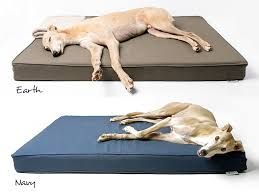 Harmony Grey Plush Lounger Memory Foam Dog Bed Petco Dog Beds and