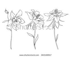 Columbine Flowers Set Of Outline
