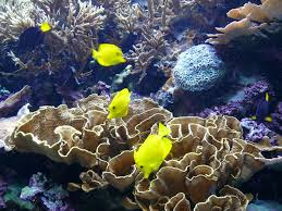 Tropical fish on display at the Moody Gardens aquarium