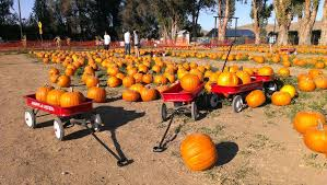 Pumpkin Picking Richmond by Houston Area Pumpkin Patches The Loken Group Your Houston Real