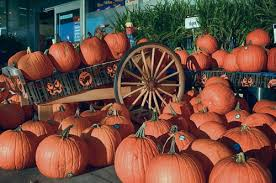 Patterson Pumpkin Patch Nc by Where To Pick Your Own Pumpkins Near Charlotte