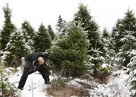 How To Nab A CutYourOwn Christmas Tree From A Front Range National