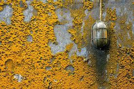 was ist gelber schimmel entfernen auswirkung maßnahmen