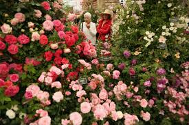 Chelsea Flower Show 2019 Tickets – How Much Do They Cost ... Rose Wine Mansion Nyc Coupon Kiplinger Tirement Code Blue Magazine A Twin Peaks Journal E Hitch Boreal Ski Discount Ros Mansion Match 2019 Monster Book Gatlinburg Tn Parts Com Promo Vail Wolffer Buy Drking Glasses Online Uk 10 Off Per Person On Large Airboat Ride 250 Off Guided Wine In Nyc Tasting Table The Is Back Enthusiast Temple Denver Promo Code Discotech 1 Nightlife App