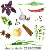 vector set of green stuff spices and ve ables drawing by watercolor at white background