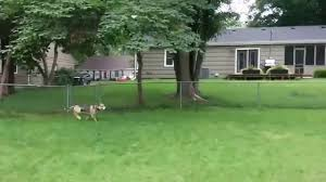 Dog Running Around In The Backyard - YouTube Grumpy Senior Dog In The Backyard Stock Photo Akchamczuk To With Love January 2017 Friendly Ideas In Garden Pricelistbiz Portrait Of Female Boxer Dog Standing On Grass Backyard Lavish Toys For Dogs Toy Organization February Digging Create A Sandbox Just For His Digging I Like Quite Moments Fall Wisconsin Quaint Revival Yesterday Caught My Hole Today Unique Toys Architecturenice Cia Fires Since Sniffing Bombs Wasnt Her True Calling Time A View From Edge All Love Part Two