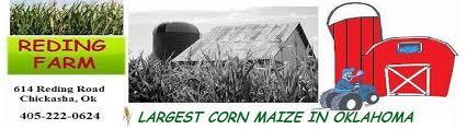 Tulsa Pumpkin Patch 2015 by Oklahoma Corn Maize Reding Farm Chickasha Oklahoma Bluegrass