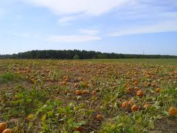 Bishop Pumpkin Farm Hours by Halloween Fun For All