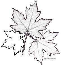 Maple Leaves Printable Leaf Fall Coloring