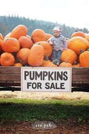 Pumpkin Patch Yuma Az Hours 30 best faces of arizona agriculture images on pinterest