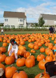 Pumpkin Picking Farm Long Island Ny by Schmitts Farms Pick Your Own Pumpkins