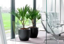 le bureau verte plantes pour le bureau