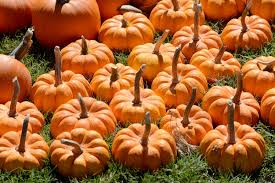 Hillcrest Farms Pumpkin Patch by Coastal Alabama U0027s 2015 Guide To Pumpkin Patches Hayrides And Fall
