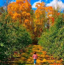 Pumpkin Picking Ridge Ny by 7 New Jersey Apple Orchards U0026 Pumpkin Patches Near Hoboken And