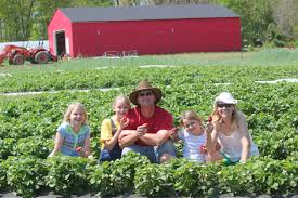 Pick Of The Patch Pumpkins Concord by Wise Acres U Pick Organic Strawberry Farm Indian Trail