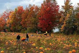 Pumpkin Patch Fort Wayne 2015 by Best Pumpkin Patches In Upstate Ny 21 Picking Destinations For