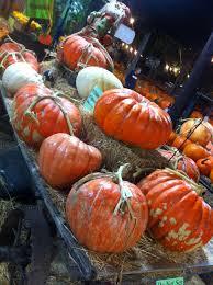 Papas Pumpkin Patch Hours by Live Oak Canyon Pumpkin Patch Yucaipa Ca Favorite Places