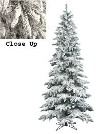 Christmas Tree Types Canada by Christmas Trees Canada