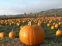 Pumpkin Patch Near Bay Area by Your 2015 Bay Area Pumpkin Patch Preview U2014 Section925