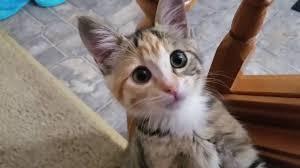kitty cat kitty cat