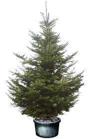 Plantable Christmas Trees Columbus Ohio by The Main Page