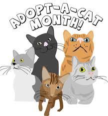 adopt a cat ljcfyi june is adopt a cat month