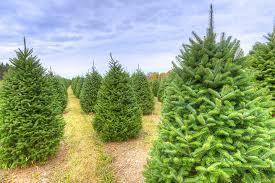 Santa Cruz County Christmas Tree Farms by Tree Farms Regional Directory