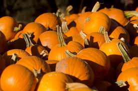 Pumpkin Patch Near Spring Tx by The 10 Best Pumpkin Patches In America