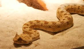 Ball Python Bedding by How To Choose The Best Bedding For Your Pet Snake