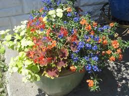 24 best Low Maintenance Plants images on Pinterest