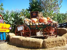 Pumpkin Patch Rides by The Pumpkin Patch In Calimesa Ca 2013