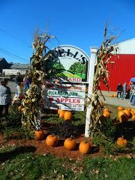 Pumpkin Picking Connecticut Shoreline by Newsandviewsjb
