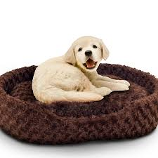 Tips Extra Dog Beds Amazon Xxl Dog Bed