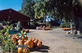 Pumpkin Patch Medford Oregon by Farms Southern Oregon U0027s Surprise Destinations