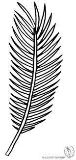 Coloring Page Of Palm Leaf To Download