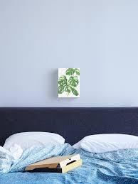 bunte monstera deliciosa indoor zimmerpflanzen liebe leinwanddruck