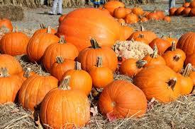 Pumpkin Patch Near Pensacola Fl by 21 Ways To Spend Your Halloween Entertainment Northwest