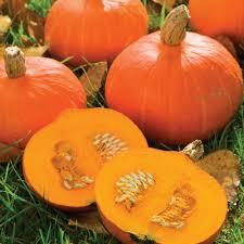 Varieties Of Pumpkins Uk by Squash Varieties Squash Orange Queen F1 Hybrid Winter